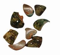 Zee schelpjes oranje bruin