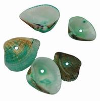 Zee schelpjes licht groen