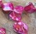 Schelpkraal Fuchsia