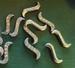 Ronde acryl kraal plated Amethist paars